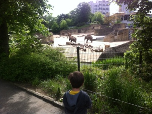 Wir besuchen den Zoo