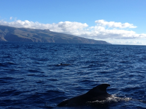 Whale Watching auf La Gomera - Delfinflosse