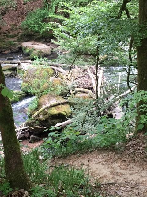 Ein Biberbau am Irreler Wasserfall